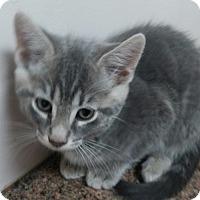 Adopt A Pet :: Maui - Warrenton, MO