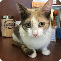 Adopt A Pet :: Lilly - Villa Hills, KY