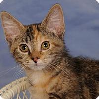Adopt A Pet :: Jackie - mishawaka, IN