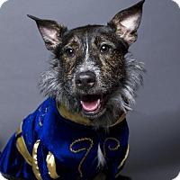 Adopt A Pet :: Deano - Baton Rouge, LA