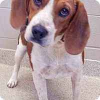 Adopt A Pet :: Mercury - Plainfield, IL
