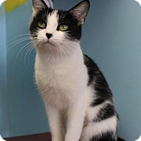 Adopt A Pet :: Mirage - West Des Moines, IA