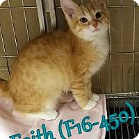 Adopt A Pet :: Faith - Tiffin, OH