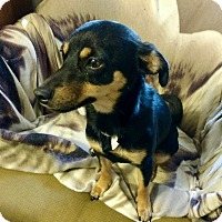 Adopt A Pet :: Hailey - Vancouver, BC
