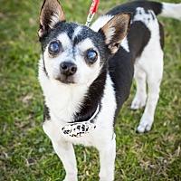 Adopt A Pet :: Diego - Tucson, AZ