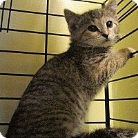 Adopt A Pet :: Kikwi & Twili - Acme, PA
