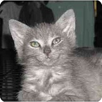 Adopt A Pet :: Kanji - Irvine, CA