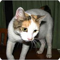 Adopt A Pet :: Vanna - Norwich, NY