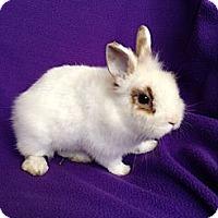 Adopt A Pet :: Joey - Paramount, CA