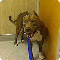 Adopt A Pet :: Tank - Orlando, FL