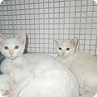 Adopt A Pet :: Amber - Medina, OH
