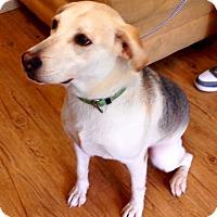 Adopt A Pet :: Izzo - Charlemont, MA