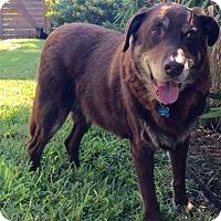 Adopt A Pet :: Roscoe Red - Austin, TX