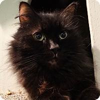 Adopt A Pet :: Fluffy - Elyria, OH