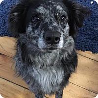 Adopt A Pet :: Tally *Courtesy Post* - Clarkston, MI