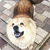 Adopt A Pet :: Nala - Spartanburg, SC