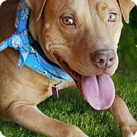 Adopt A Pet :: RILEY - Phoenix, AZ