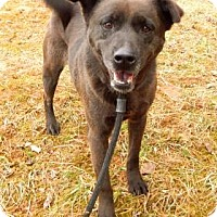 Adopt A Pet :: Lacey - Bardonia, NY