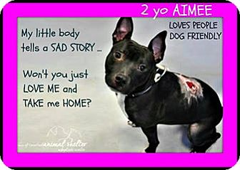 Pit Bull Terrier Mix Dog for adoption in Wantagh, New York - Aimee