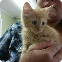 Adopt A Pet :: Poke - Putnam, CT
