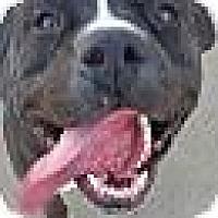 Adopt A Pet :: Lucy - Chula Vista, CA