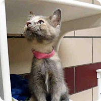 Adopt A Pet :: MIMI - Fort Wayne, IN