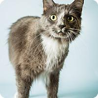 Adopt A Pet :: Lionel - Hendersonville, NC