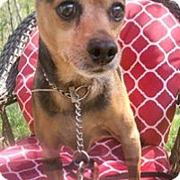 Adopt A Pet :: Teddy - Canterbury, CT