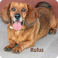 Adopt A Pet :: Rufus - Idaho Falls, ID