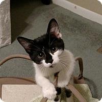 Adopt A Pet :: Rivka - Cincinnati, OH