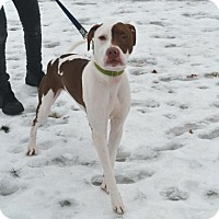 Terrier (Unknown Type, Medium) Mix Dog for adoption in Akron, Ohio - Mack