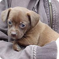 Adopt A Pet :: Noel (3 lb) Video! - Burlington, VT