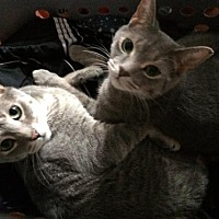 Adopt A Pet :: zz 'Bonkers and Matilda' urgent courtesy listin - Cincinnati, OH