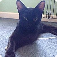 Adopt A Pet :: Ebony - Parkton, NC