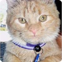 Adopt A Pet :: Tigger - Pasadena, CA
