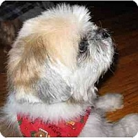 Adopt A Pet :: Nicky - Mays Landing, NJ