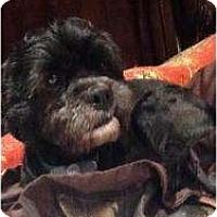 Adopt A Pet :: Smooch - Richmond, VA