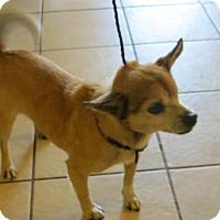 Adopt A Pet :: Jack - McLoud, OK