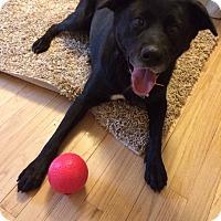 Adopt A Pet :: Daisy - Stroudsburg, PA