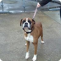 Adopt A Pet :: Steele - Brentwood, TN