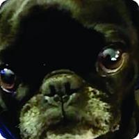 Adopt A Pet :: Joanie - Pismo Beach, CA