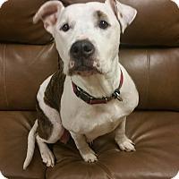 Adopt A Pet :: Myah *PENDING* - Lima, OH