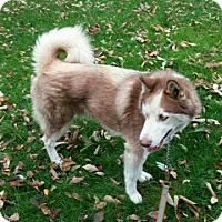 Adopt A Pet :: Karson - Elyria, OH