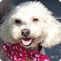Adopt A Pet :: Muffin - La Costa, CA