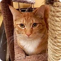 Adopt A Pet :: Davey - Hallandale, FL