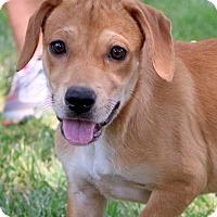 Adopt A Pet :: Pokey - Glastonbury, CT