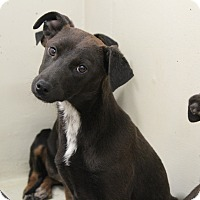 Adopt A Pet :: Sue - Old Saybrook, CT