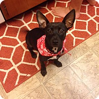 Adopt A Pet :: Jeanie - Daleville, AL