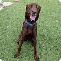 Adopt A Pet :: Henry #3 - Purcellville, VA