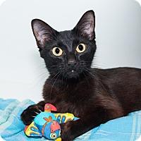 Adopt A Pet :: Opal - Seville, OH